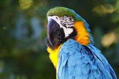 Un portrait d'un beau perroquet Image libre de droits