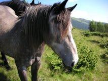 Un portrait d'un cheval dans la nature Photos stock
