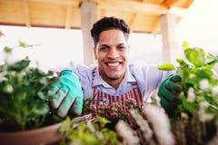 Un portrait de jardinier de jeune homme ? l'int?rieur ? la maison, plantant des fleurs photographie stock