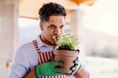 Un portrait de jardinier de jeune homme ? l'int?rieur ? la maison, plantant des fleurs image stock