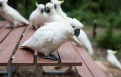 Un portrait de perroquet de cacatoès Image stock