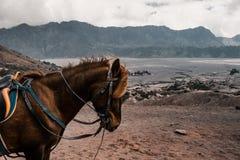 Un portrait de vue de c?t? d'une t?te de cheval photographie stock libre de droits