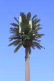 Un poste disfrazado del teléfono celular Foto de archivo libre de regalías