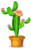 Un pot avec une usine fleurissante de cactus Image libre de droits