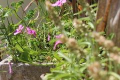Un pot de fleurs de ressort photographie stock
