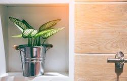 Un pot en bois est placé dans le mur d'un beau modèle en bois photo stock
