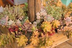 Un pote de flores coloridas Imágenes de archivo libres de regalías