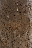 Un poteau en bois monté par termite en Gambie image libre de droits
