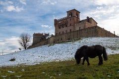 Un potro pasta en el jardín del castillo del montenovo Fotos de archivo