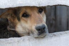Un povero cane dietro il recinto immagini stock libere da diritti