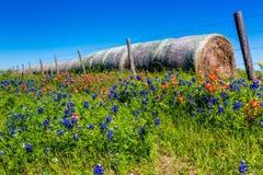 Un pré avec Hay Bales rond et Texas Wildflowers frais image libre de droits