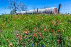 Un pré avec Hay Bales rond et Texas Wildflowers frais photographie stock libre de droits