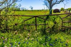 Un pré avec Hay Bales rond et Texas Wildflowers frais photos libres de droits