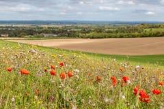 Un pré dans la campagne du Sussex photo stock