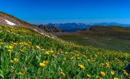 Un prado alpino hermoso de la montaña en verano imagenes de archivo