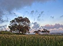 Un prado en Fawwara, Malta Fotos de archivo