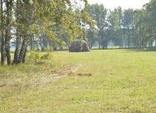 Un prado hermoso con una hierba oblicua en el bosque en día de verano soleado Imagen de archivo libre de regalías