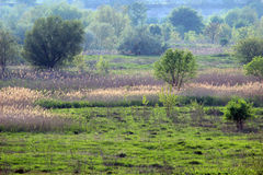 Un prado pantanoso Foto de archivo