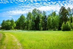 Un prado verde hermoso en verano con la hierba alta fotografía de archivo libre de regalías