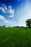 Un prado verde y un cielo asoleado, azul 2 Imagen de archivo libre de regalías