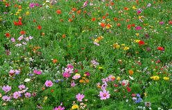 Un prato dei fiori selvaggi fotografia stock
