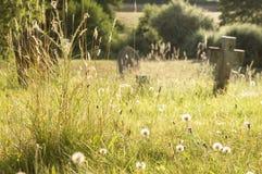 Un prato del cimitero dell'estate artisticamente vago con i fiori selvaggi ed i denti di leone ha evidenziato dal sole di sera fotografia stock libera da diritti