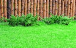 Un prato inglese verde Fotografia Stock