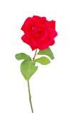 Un presente rojo de la rosa Fotos de archivo libres de regalías