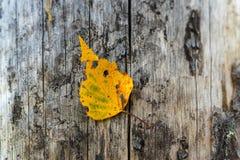 Un primer de la hoja del otoño Imagen de archivo libre de regalías
