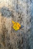 Un primer de la hoja del otoño Imagenes de archivo