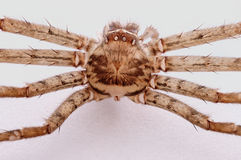 Un primer de la parte posterior de la cáscara de la araña Fotografía de archivo