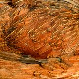 Un primer de las plumas del pollo Imagen de archivo libre de regalías