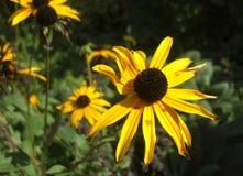Un primer de una flor en el desierto Imagen de archivo libre de regalías