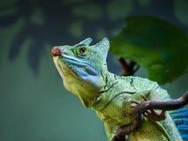 Un primer en una iguana que se sienta en una llave en suave-foco imagen de archivo