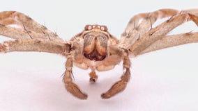 Un primo piano del positivo delle coperture del ragno Immagine Stock