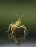 Un primo piano dell'insetto Immagini Stock