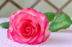 Un primo piano della rosa di rosa sulla tavola Immagini Stock