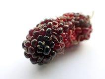 Un primo piano di maturazione rosso della frutta del gelso Fotografia Stock