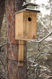 Un primo piano di un birdhouse allegato ad un albero Fotografia Stock