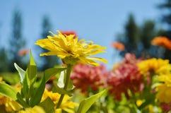 Un primo piano di un campo dei fiori Fotografia Stock