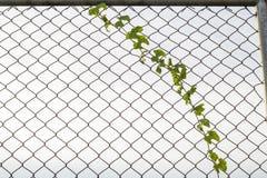 Un primo piano di un recinto a catena Fotografie Stock Libere da Diritti