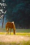 Un profil de tête de cheval sauvage Photos libres de droits