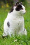 Un profilo del gatto Immagine Stock