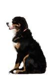 Un profilo laterale di un cane che si siede in su Immagine Stock