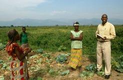 Un progetto di agricoltura nell'Uganda. Fotografia Stock Libera da Diritti