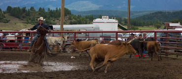 Un proprietario di ranch che fa concorrenza ad un rodeo in colorado Immagine Stock Libera da Diritti