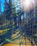 Un puente de cuerda en un bosque imagenes de archivo
