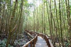 Un puente de madera curvado en el bosque del mangle con la luz del sol imagen de archivo libre de regalías