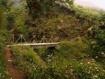 Un puente de madera solo en el bosque Fotografía de archivo