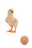 Un pulcino del bambino e un uovo Fotografia Stock